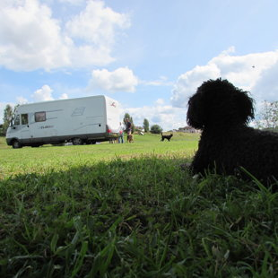 Dogs are allowed in our campsite
